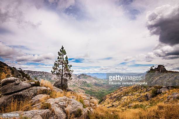 Lovely landscape with lonely pine tree and moody skies in Peneda-Gerês National Park, PORTUGAL
