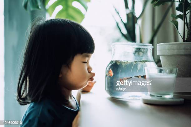 lovely little asian girl looking at fish bowl and blowing a kiss to the fishes while the fishes are kissing - fish love stock pictures, royalty-free photos & images