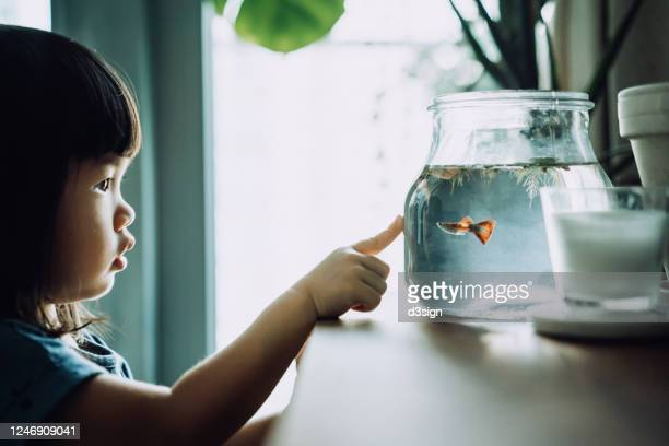 lovely little asian girl looking at fish bowl and pointing to fishes at home - fish love stock pictures, royalty-free photos & images