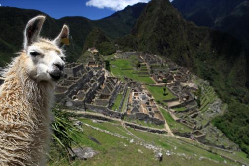 Lovely Llama and Macchu Picchu 157617041
