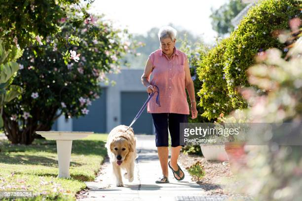 lovely morning sunlight as senior woman walks her dog along a foot path - dog walker stock photos and pictures