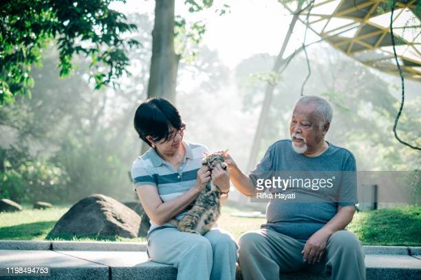 lovely senior couple playing with cat - rifka hayati stock pictures, royalty-free photos & images