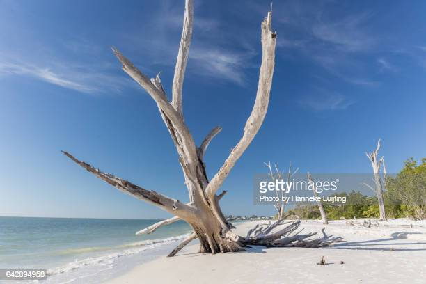 lovers key state park - state park stock pictures, royalty-free photos & images