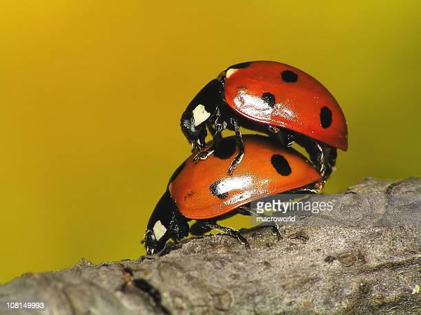Loving each other Ladybugs