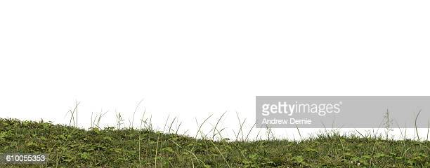 low angel close up of rough grass with weeds - andrew dernie stock pictures, royalty-free photos & images