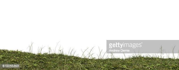 low angel close up of rough grass with weeds - andrew dernie stockfoto's en -beelden