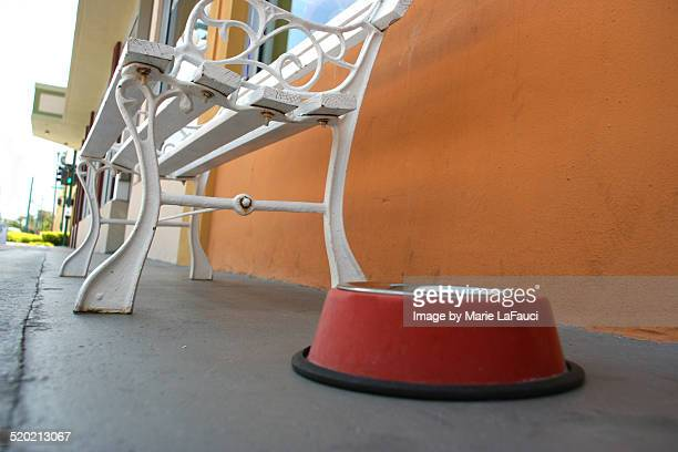 low angle of dog's water bowl outside - marie lafauci stock pictures, royalty-free photos & images