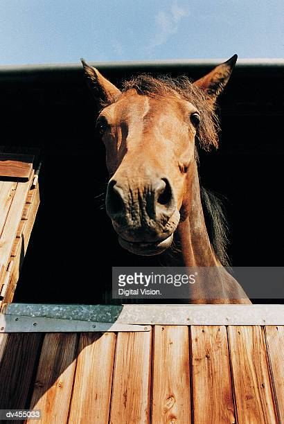 Low Angle of Horse in Stall