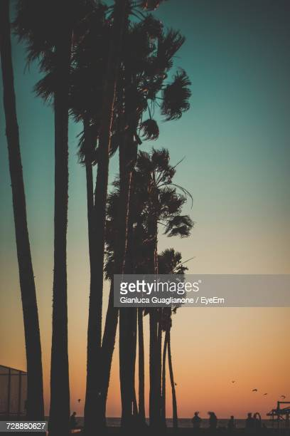 low angle of palm trees against sky during sunset - la waterfront stock pictures, royalty-free photos & images