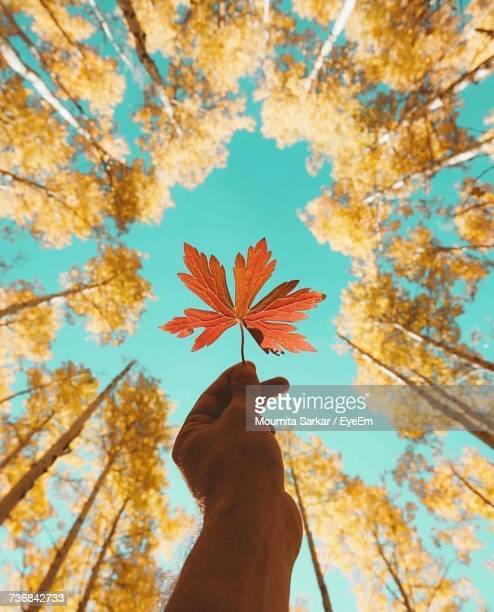 Low Angle Of Person Holding Leaf In Forest