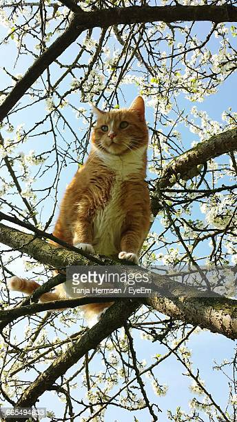 Low Angle Portrait Of A Cat On Branch
