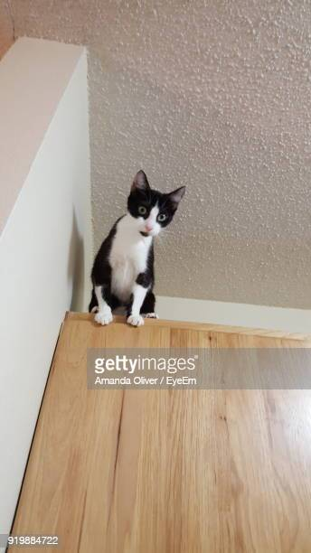 Low Angle Portrait Of Cat Sitting On Cabinet