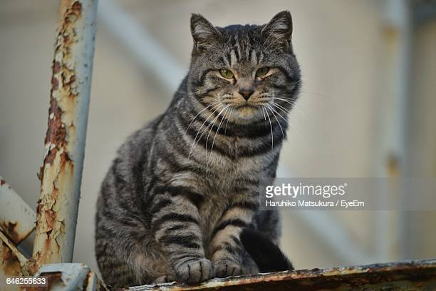 Low Angle Portrait Of Cat Sitting On Rusty Metal