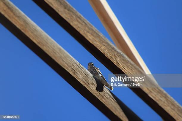 Low Angle Portrait Of Hawk On Wood Against Clear Blue Sky