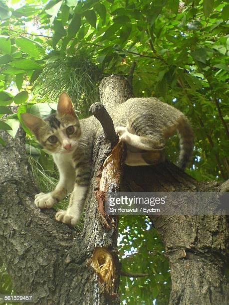 Low Angle Portrait Of Kitten Relaxing On Tree Trunk