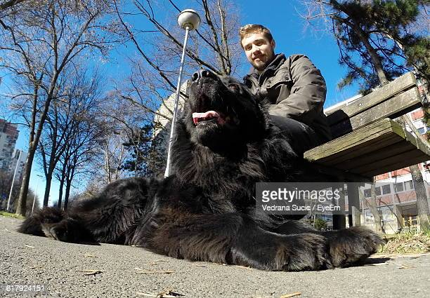 Low Angle Portrait Of Man Sitting On Bench By Newfoundland Dog On Street