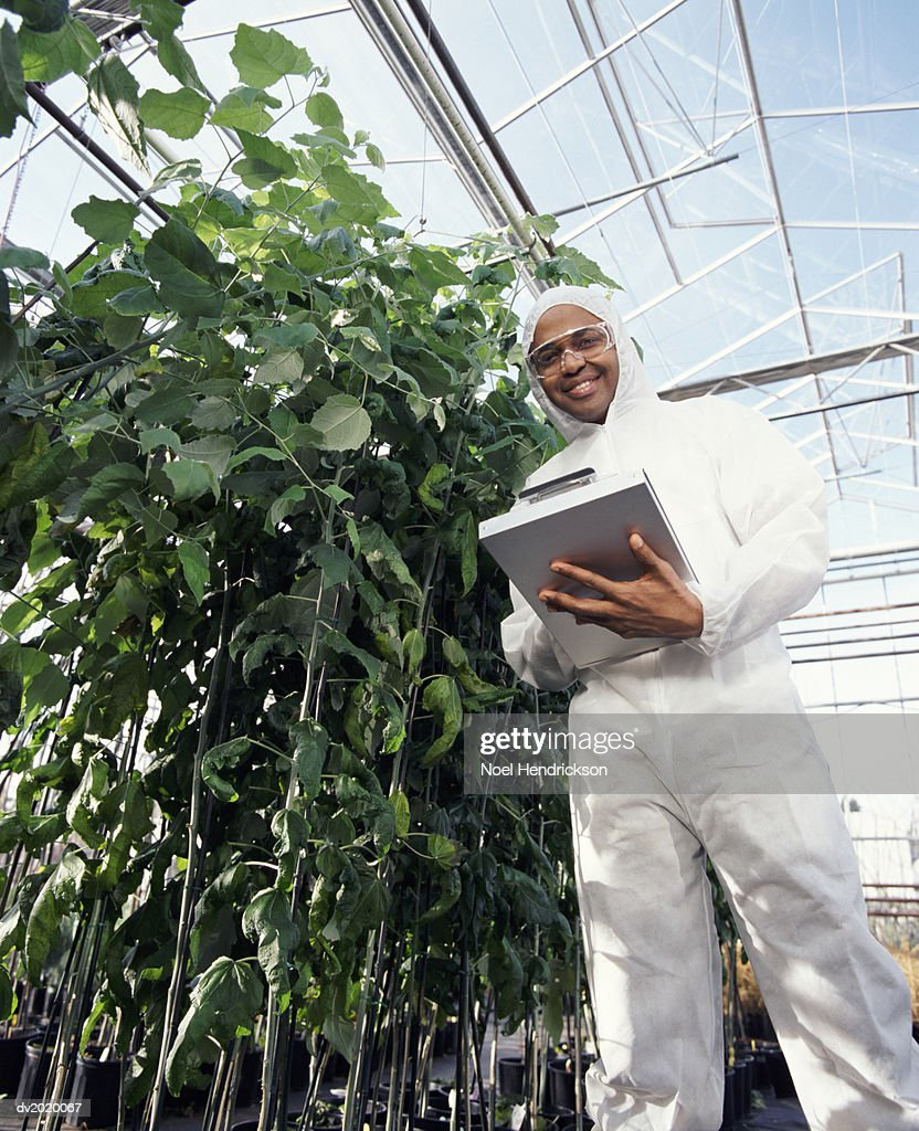 Low Angle Shot of a Scientist Wearing a Clean Suit and Holding a Clipboard, in a Greenhouse : Stock Photo