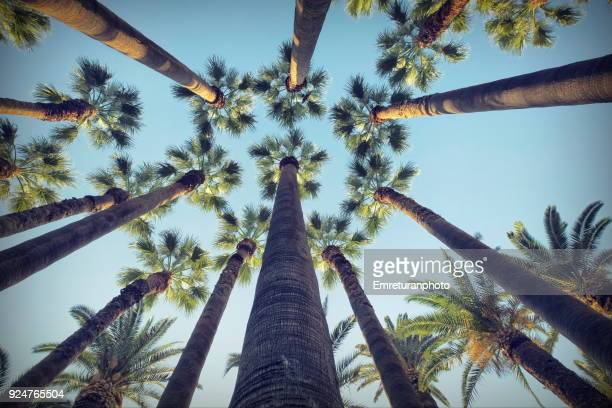 low angle shot of palm trees in public park. - izmir stock pictures, royalty-free photos & images