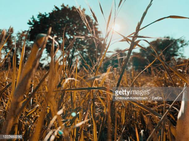 low angle view lying in grass / enjoying natur / beautiful moment / zen - natur stock pictures, royalty-free photos & images