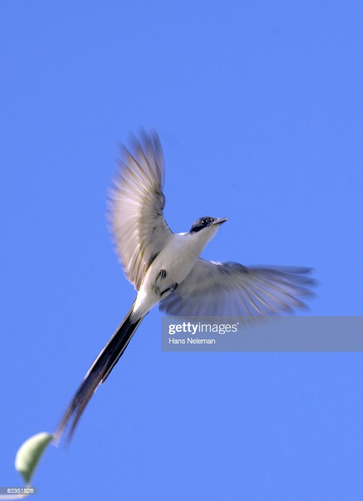 low angle view of a bird flying in the sky salto uruguay ストック