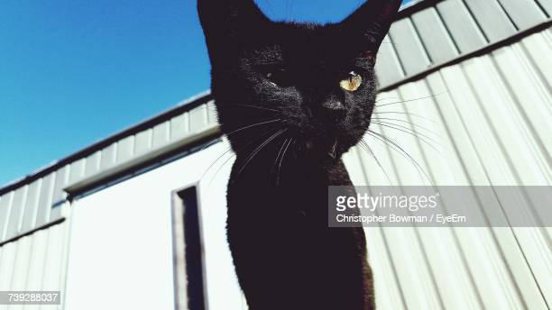 Low Angle View Of A Black Cat Outdoors