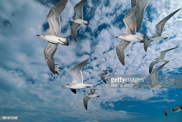 Low angle view of a flock of birds flying in the sky Costa Rica