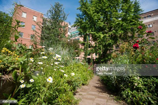 A low angle view of a flowerlined meandering pathway through The Phoenix Garden a sustainable community garden situated in the urban heart of...