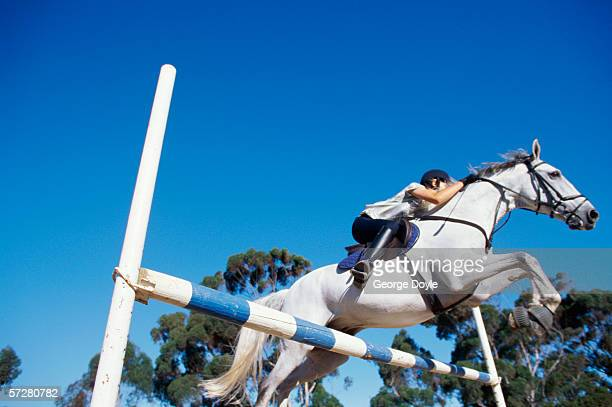 low angle view of a girl riding a horse and jumping over a barrier - hurdling horse racing stock pictures, royalty-free photos & images