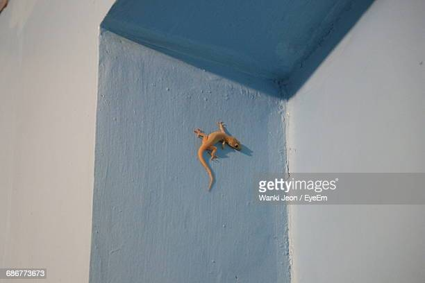 Low Angle View Of A Lizard On The Wall