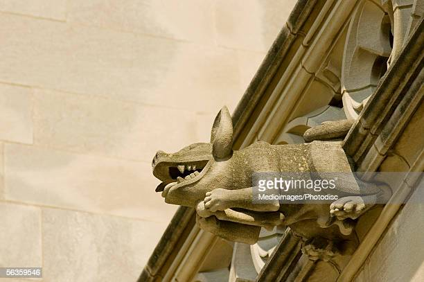 Low angle view of a pig gargoyle, National Cathedral, Washington DC, USA
