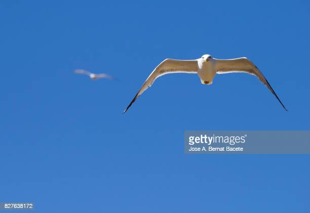 Low angle view of a seagull flying over a blue sky