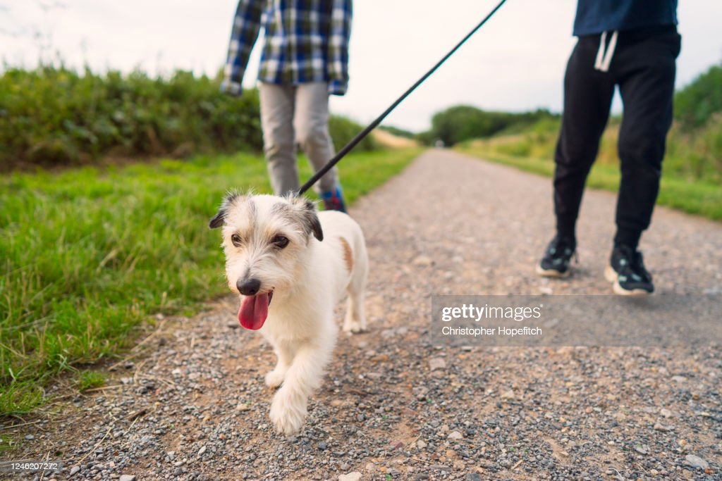Low angle view of a small dog being walked by his family in a  park : Stock Photo