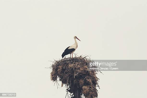 Low Angle View Of A Stork Perching On Birds Nest
