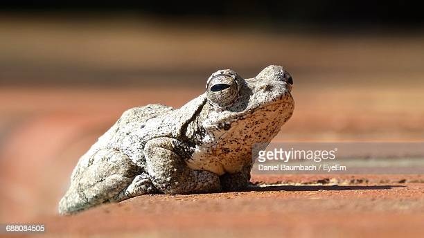 Low Angle View Of A Toad
