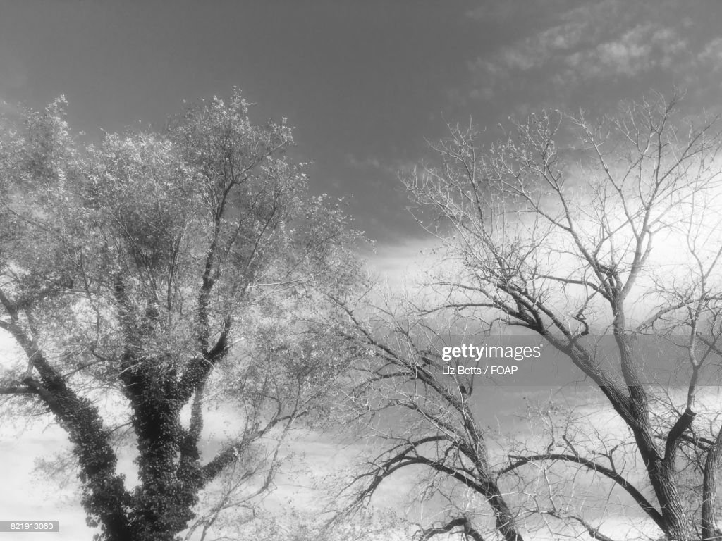 Low angle view of a tree branch : Stock Photo