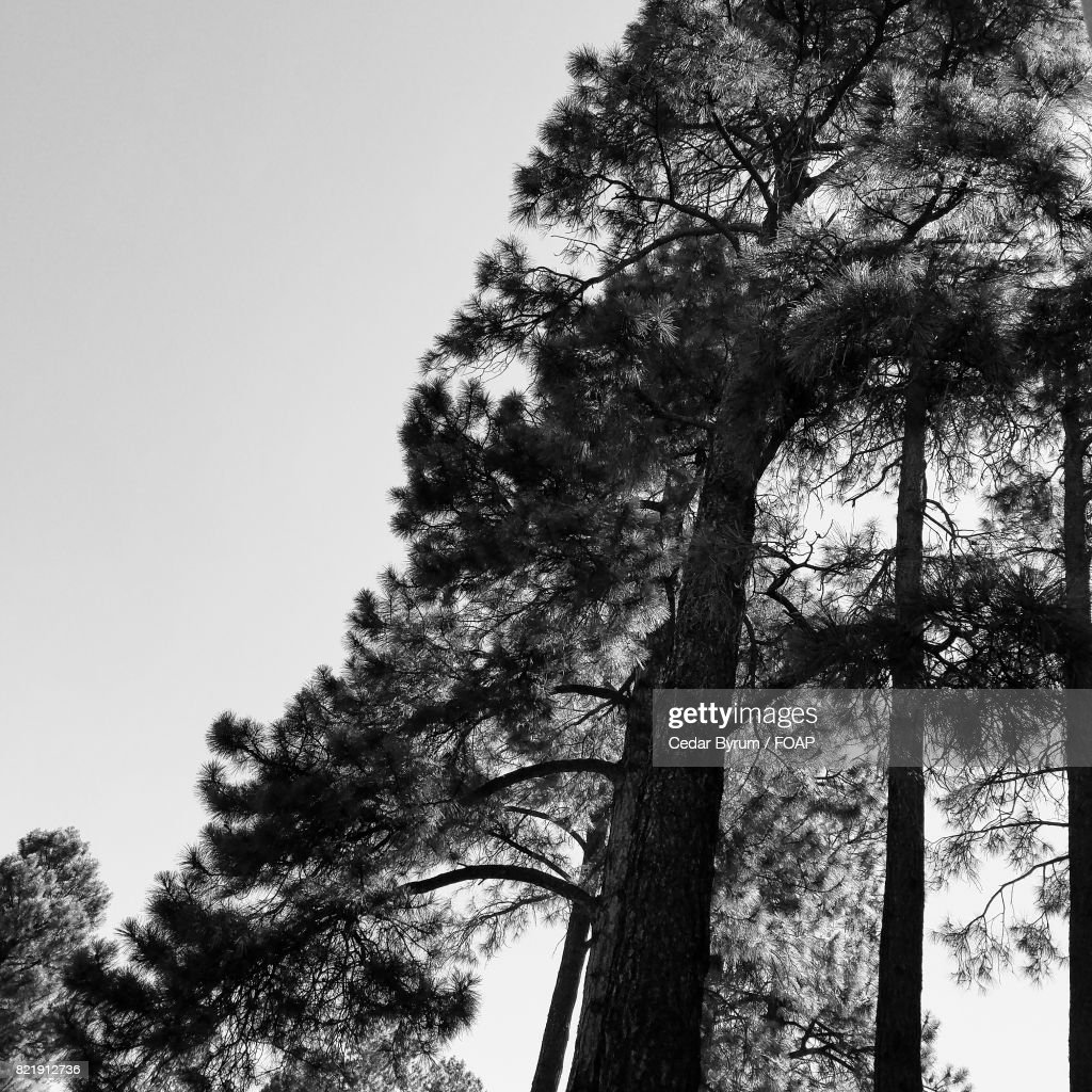 Low angle view of a tree : Stock Photo