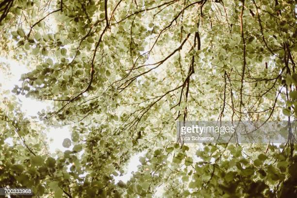 Low Angle view of a tree with green leaves