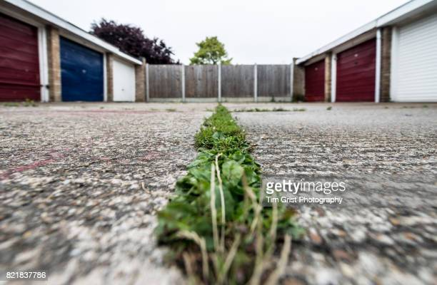 Low Angle View of a Weeds Growing Through Concrete