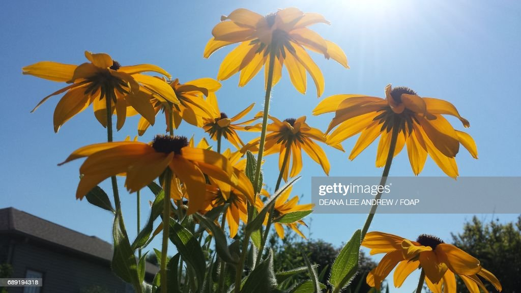 Low angle view of a yellow flowers : Stock Photo