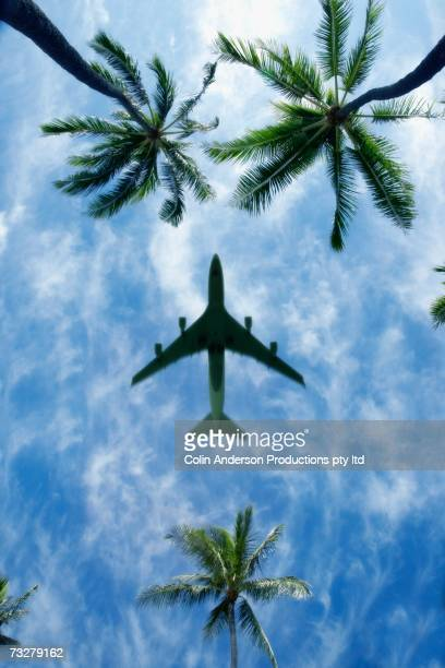 Low angle view of airplane in blue sky with palm trees