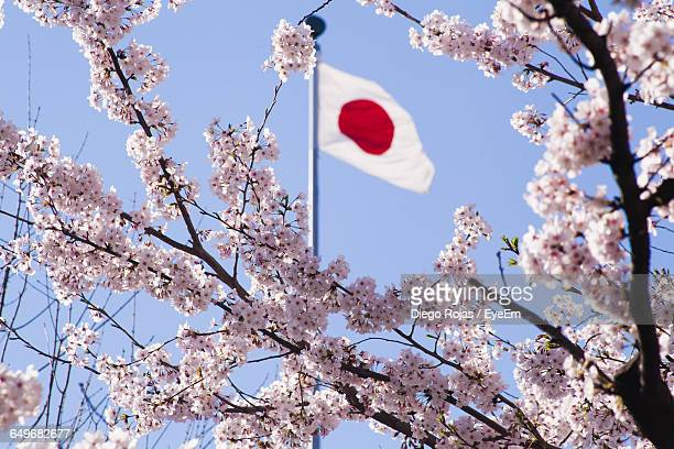 low angle view of american flag and flower tree - japanese flag stock photos and pictures