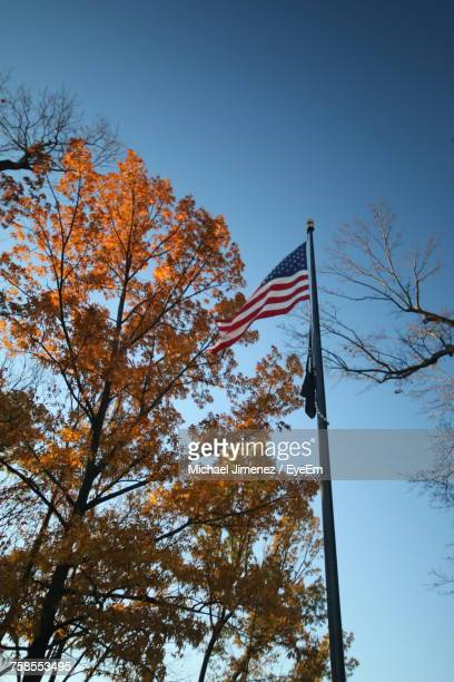 Low Angle View Of American Flag By Autumn Trees Against Clear Blue Sky