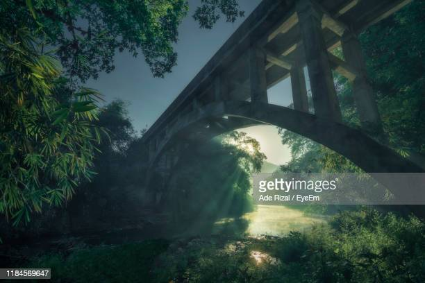 low angle view of arch bridge in forest - ade rizal stock photos and pictures