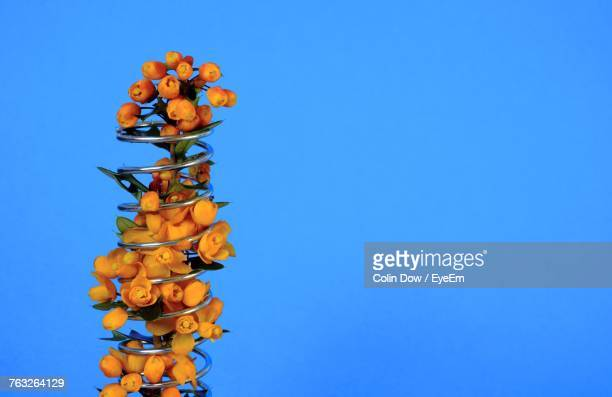 Low Angle View Of Artificial Flowers In Spiral Decoration Against Blue Background