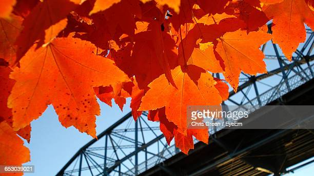 Low Angle View Of Autumn Leaves By Bridge