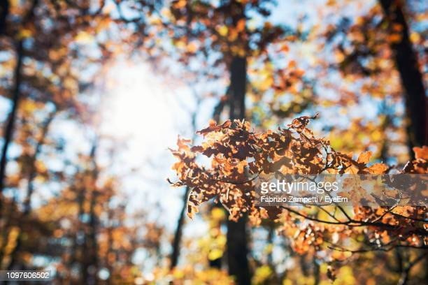 low angle view of autumn leaves on tree - fabrizio zampetti foto e immagini stock