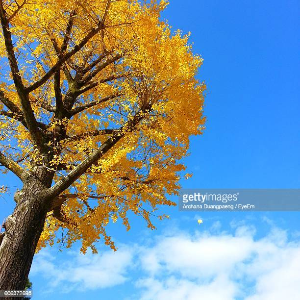 Low Angle View Of Autumn Tree Against Blue Sky