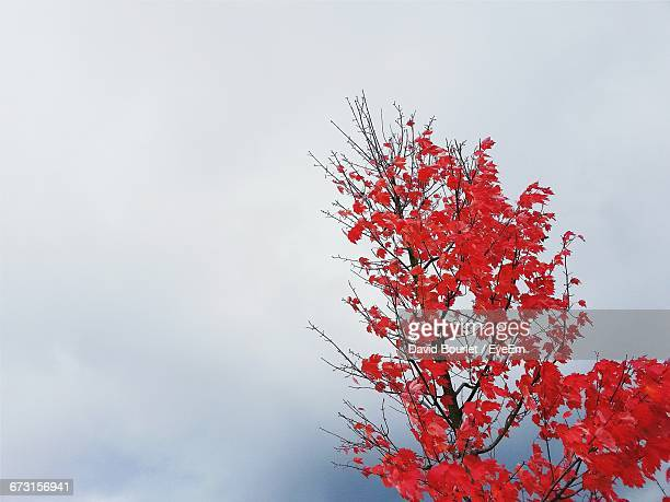 Low Angle View Of Autumn Tree Against Sky In Foggy Weather