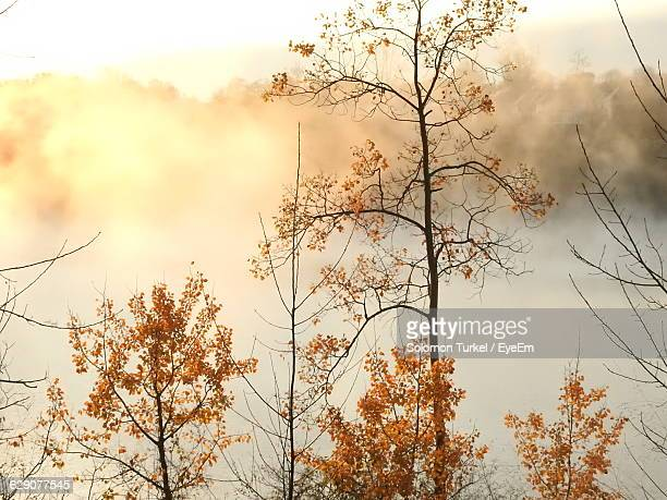 low angle view of autumn trees against cloudy sky - solomon turkel stock pictures, royalty-free photos & images