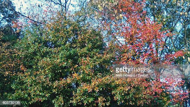 low angle view of autumn trees against sky - howard,_wisconsin stock pictures, royalty-free photos & images